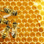 Local beekeeper