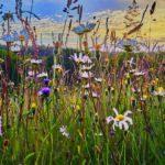 Biodiversity Net Gain - what we know so far
