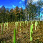 Rewilding in Agricultural Tenancies