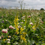 Have your say now on the new Environmental Land Management Scheme (ELMS)