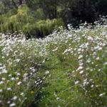 Tips to help you establish a great Wild Garden