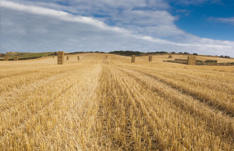 The Agricultural Transition Plan – Is your business prepared?
