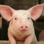 How I nearly made a pig's ear of selling my own house