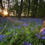 Poulton Wood