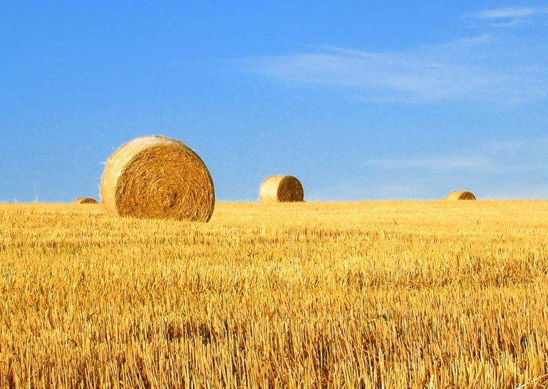 Agricultural Property Relief - Don't let the taxman harvest more than his due